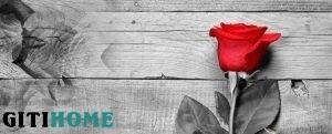 پوستر دیواری طرح گل رز کاغذ دیواری